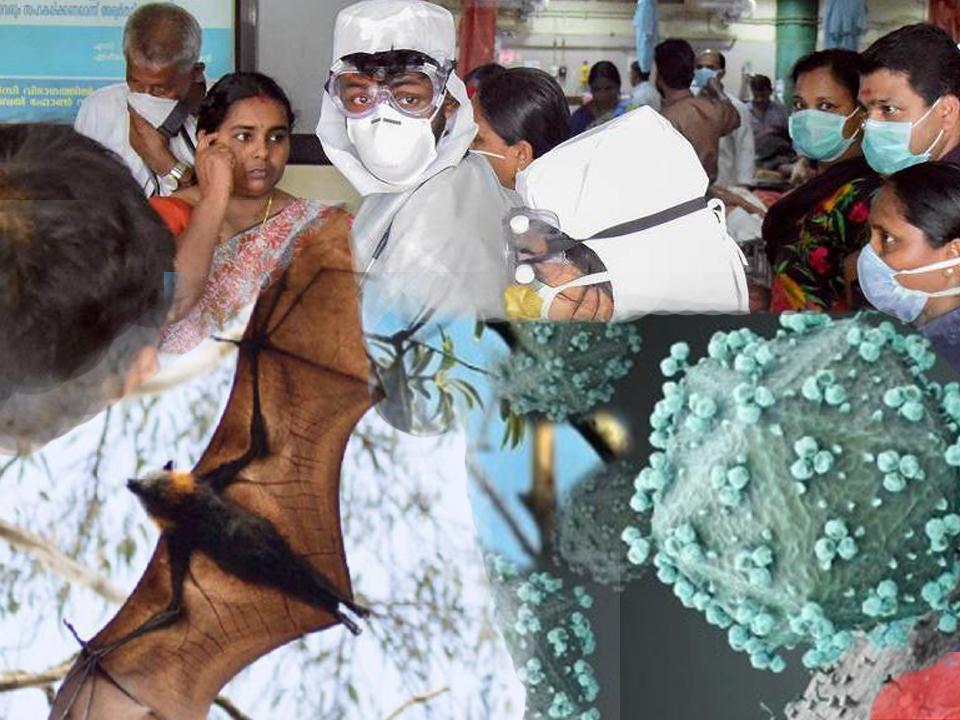 നിപ്പാ വൈറസിനെ പ്രതിരോധിക്കാന് ഒന്നേമുക്കാല് കോടിയുടെ സുരക്ഷാ ഉപകരണങ്ങള് കേരളത്തിലെത്തി
